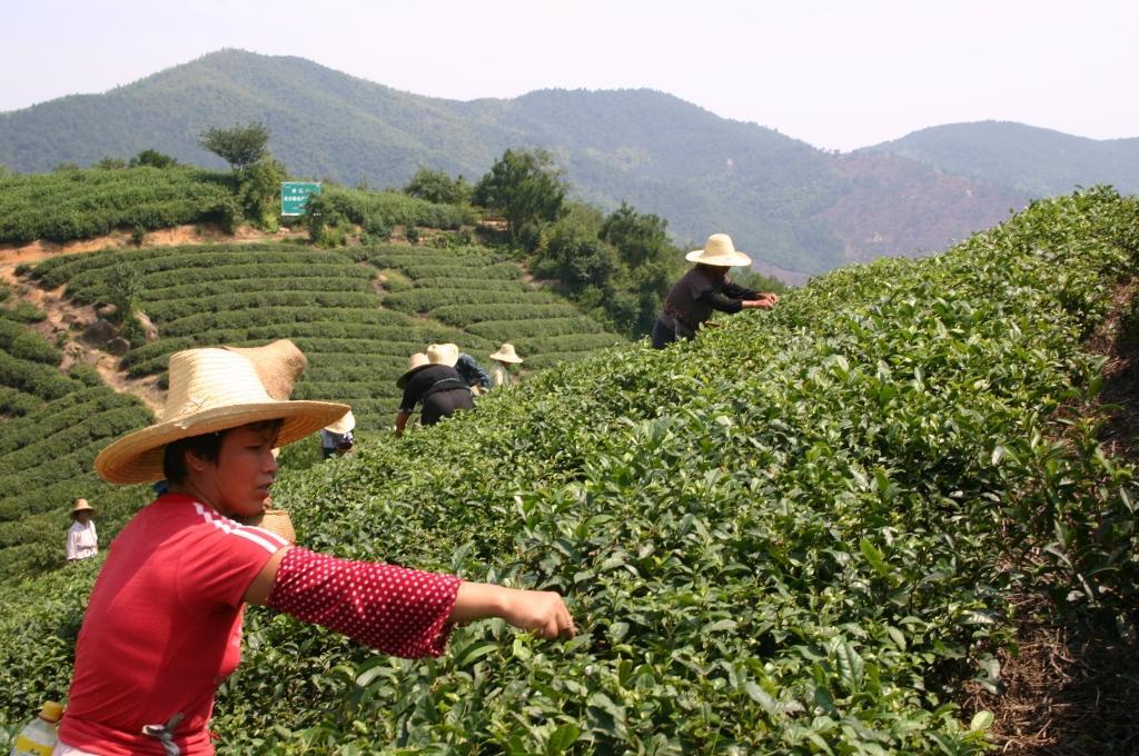 китайский чай музыка